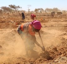 mediaitem/1Preparing_the_soil_for_regeneration_Niger