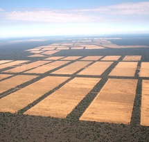mediaitem/massive_deforestation_for_cattle_in_Paraguay_Guyra