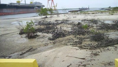 Destroyed mangrove forest on the island Tatuoca