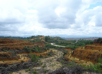 preparing an oil palm plantation Sumatra _2
