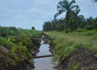 2 - Drainage canal in an oil palm plantation near Semanga