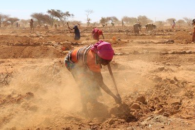 Preparing the soil for regeneration, Niger