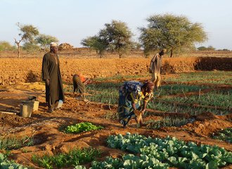Rising groundwater level in vegetable garden of farmer Batodi in Niger