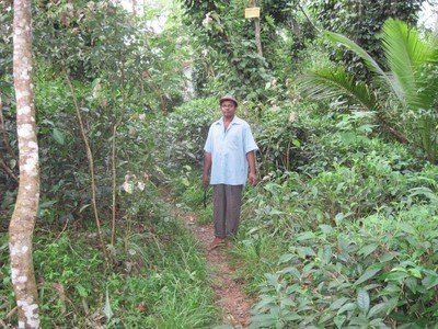 Tea farmer in forest garden- Sri Lanka