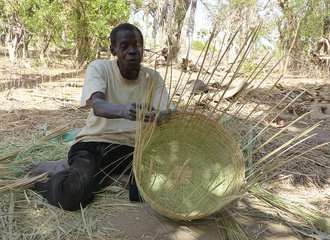 Weaving baskets of palm tree material from a Farmer Managed Natural Regeneration plot in Senegal