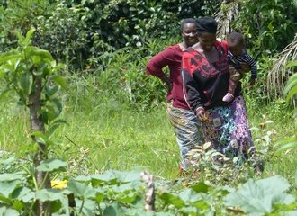 Women in Mbiame, Cameroon, have planted trees to border their vegetable gardens