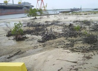 mangroves destroyed for expansion of Suape Harbor, Brazil