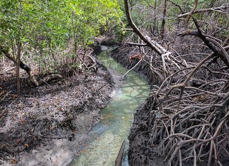 polluted river in mangrove forest near Suape