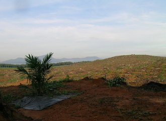 preparing soil for oil palm plantation_Borneo_Photo Lian Pin Koh on Flickr