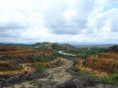 deforested area for a palmoil plantation in Indonesia