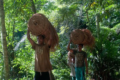 Rattan, a Non-Timber Forest Product (NTFP). NTFP's are an important source of income for local communities