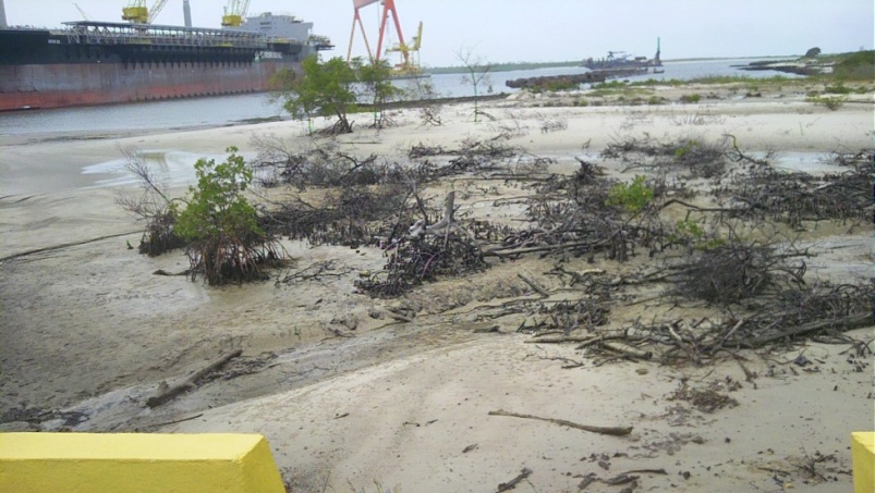 Destroyed mangroves
