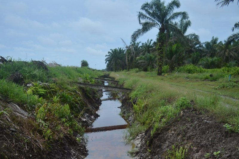 12_-_Drainage_canal_in_an_oil_palm_plantation_near_