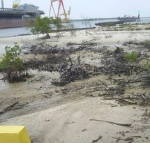 mediaitem/mangroves_destroyed_for_expansion_of_Suape_Harbor_B