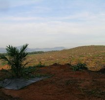 mediaitem/preparing_soil_for_oil_palm_plantation_Borneo_Photo